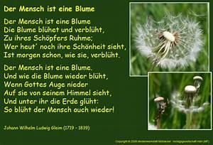 Liebe Ist Wie Eine Blume : gedichte online rachael edwards ~ Whattoseeinmadrid.com Haus und Dekorationen