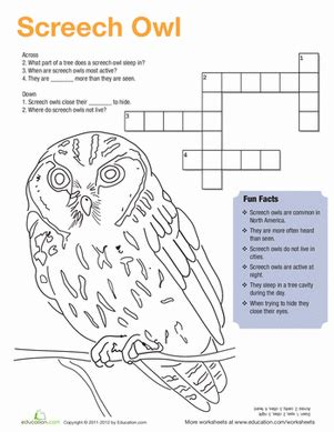 screech owl facts worksheet education