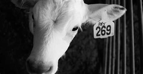 was bedeutet sa 269 bedeutung infos zu kalb 269 veggiesearch