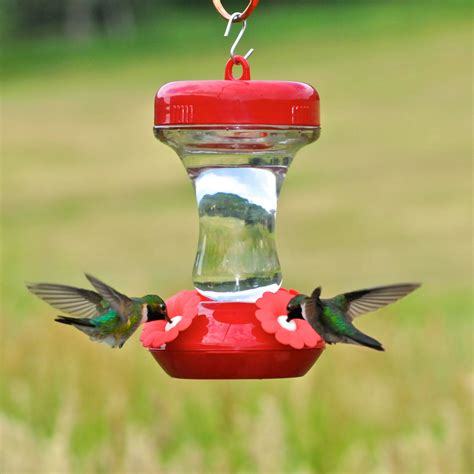 best hummingbird feeder pet 174 s finest 8 oz top fill glass