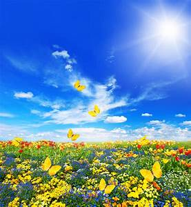 Wiese Mit Blumen : wiese mit sortierten blumen und schmetterlingen stockbild ~ Watch28wear.com Haus und Dekorationen