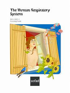 Pdf  The Human Respiratory System Blg U20135061