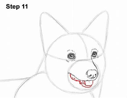 Corgi Draw Welsh Dog Drawing How2drawanimals Mouth
