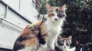 From The Vet  5 Subtle Signs Of Kidney Disease In Cats