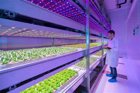 indoor farming led lights philips 39 new growwise indoor farm will revolutionize food