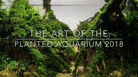 Aquascape Competition by Aquascaping Contest The Of The Planted Aquarium 2018
