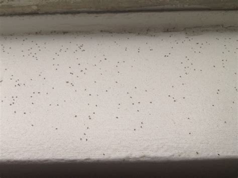 Tiny Spheres That Look Like Poppy Seeds On My Windowsill