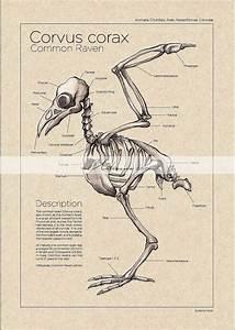 250 Best Bird Labels Images On Pinterest