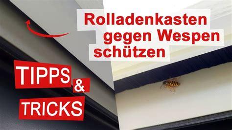 Wespennest Im Rolladenkasten Wer Zahlt by Hornissennest Im Rolladenkasten