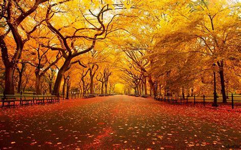 Autumn wallpaper | 1920x1200 | #38688