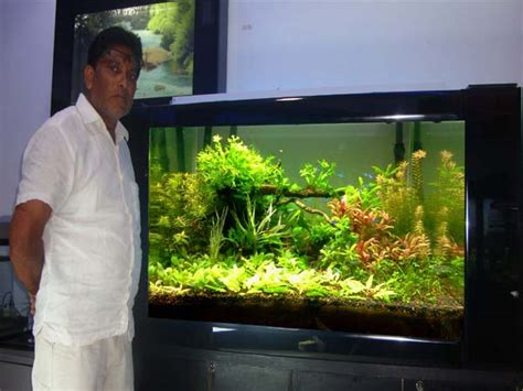 aquarium design india professional aquarium designer