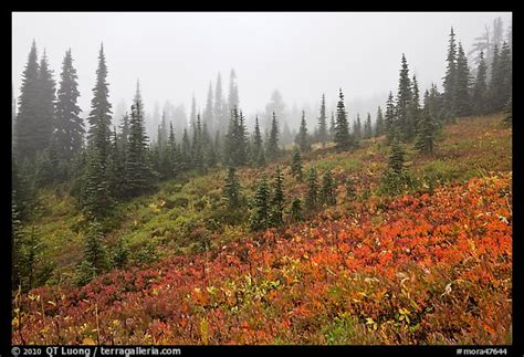 Foggy Alpine Meadows In Autumn. Mount
