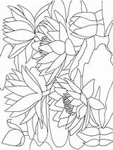 Coloring Lily Pages Water Calla Flower Printable Colouring Flowers Holding Frogs Getcolorings Coloringhit Recommended Colors Mycoloring sketch template
