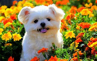 Puppy Spring Flowers Windows
