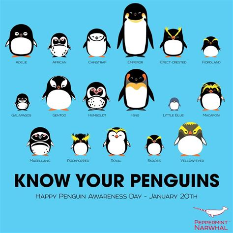 Now Your Meme - know your penguins penguins know your meme