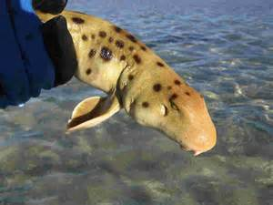 cat shark beaches of oz