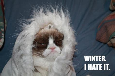 cat cold what i and grumpy cat in common