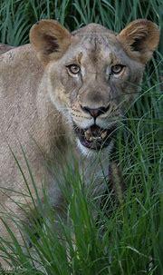 Cincinnati Zoo 7-19-16-1828 | Cincinnati zoo, Nature ...