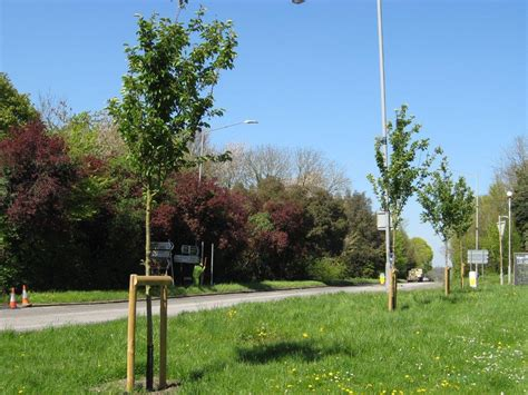 Planting 100 New Trees By 2020 — Chalfont St Peter Parish