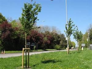 Planting 100 New Trees By 2020  U2014 Chalfont St Peter Parish