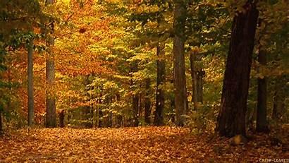 Fall Animated Nature Gifs Falling Leaves Autumn