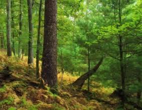 picture wood tree leaf nature landscape fern