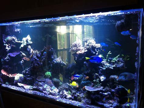 salt water fish tank life of tracy saltwater fish tank