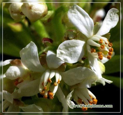 Elegants (foto) - augu stādīšana un kopšana   Vietne par ...