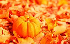 autumn pumpkin background - Mobile wallpapers