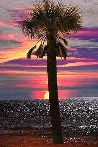 Sunset palm - image #1869458 by patrisha on Favim.com