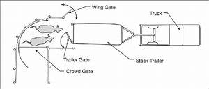 Tractor Trailer Loading Cattle Diagram