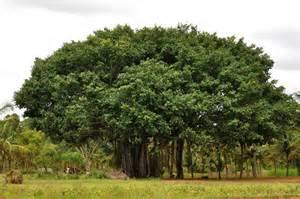 national tree dv 39 s corner