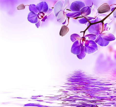 desktop wallpapers violet orchid flower