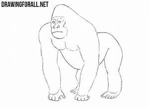 How To Draw A Gorilla Drawingforallnet