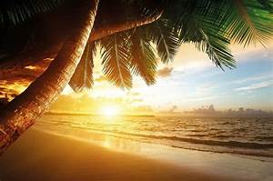 Tropical Sandy Beach Sunset Wallpaper Palm Trees Sea Photo ...