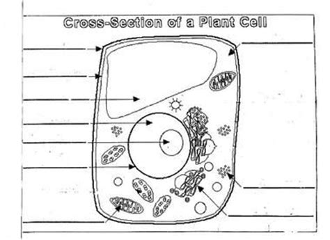 plant cell diagram worksheet plant cell diagram