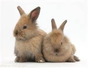 Cute Baby Bunny Rabbits Kissing