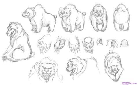 draw  cartoon bear step  step cartoon animals