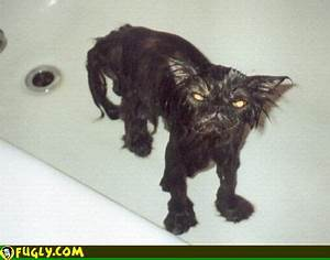 Angry Wet Cat - Random Pictures
