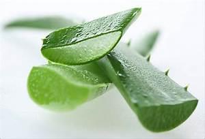 Aloe Vera Essen : comparison amla juice and aloe vera juice indian weight loss blog ~ Markanthonyermac.com Haus und Dekorationen