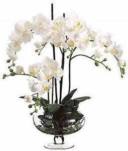 Tillandsien Im Glas : die besten 25 orchideen im glas ideen auf pinterest topf orchidee mitteldekoration orchideen ~ Eleganceandgraceweddings.com Haus und Dekorationen