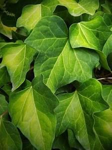Pflanzen Luftreinigung Schlafzimmer : luftreiniger vs natur pflanzen zur luftreinigung luftwaescher test ~ Eleganceandgraceweddings.com Haus und Dekorationen