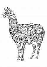 Llama Coloring Lama Paisley Zentangle Patterns Lamas Erwachsene Llamas Colorear Shape Adult Animal Simple Colorare Motifs Avec Coloriage Malbuch Fur sketch template