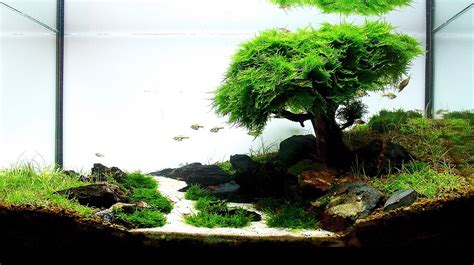 aquascaping basics planted aquarium substrate aquascaping