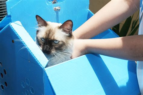 how to keep cats cars keep cats car 28 images the car cover blog keep cat s off your car or car cover keep cats