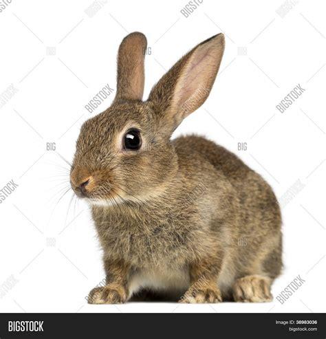 cuisiner le lapin de garenne image et photo de lapin de garenne ou lapin bigstock