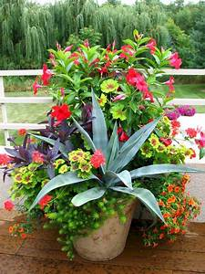 10, Most, Popular, Ornamental, Plants, Ideas, For, Beautiful, Front, Yard
