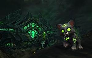 This Year39s World Of Warcraft Charity Pet Is An Adorable