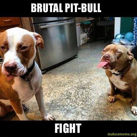 Pit Bull Memes - brutal pit bull fight make a meme