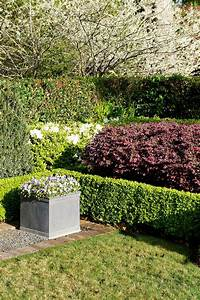 Loropetalum hedge sits behind trimmed boxwoods framing the